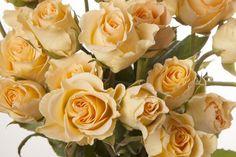 girlie follies spray roses - Google Search Peach Flowers, Cut Flowers, Rose Varieties, Flower Names, Spray Roses, Fire And Ice, Rose Wedding, Beautiful Roses, Sprays
