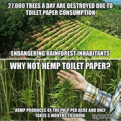 #Hemp only takes 5 months to grow