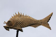 mean-looking fish