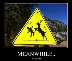 deer boxing