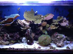 """Check out this growth! Christy says all corals in this tank were started as 1""""-2"""" frags less than 2 years ago without any calcium reactors; just weekly water changes. Sweet growth, don't ya think?!?! 110 gallon mixed reef under panorama LED retro 36 (via facebook)"""