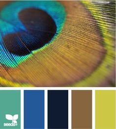 Peacock Hues: Turquoise, Bright Blue, Navy, Tan and Greenish Yellow