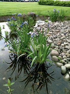 Rain Gardens: Beautiful, Easy, And Good For The Earth