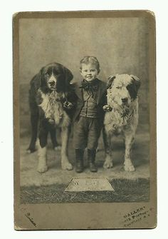 .a boy and his dogs