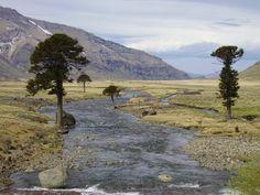 La estepa es un bioma que comprende un territorio llano, de vegetación herbácea con climas extremos y pocas precipitaciones.