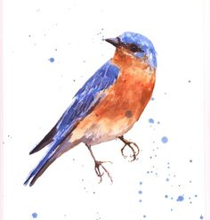BLUEBIRD Print bird art bluebird painting blue by eastwitching, $18.00