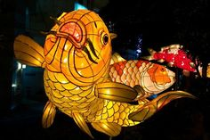 koi paper and wicker lanterns at the Japanese Lantern Festival Fish Lanterns, Paper Lanterns, Japanese Culture, Japanese Art, Japanese Beer, Chinese Culture, Instalation Art, Koi Fish Pond, Lantern Festival