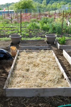 5 Tips and tricks to try in your garden for a bigger and easier harvest.
