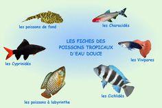 poissons tropicaux d'eau douce