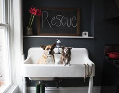 Vintage double sink belonging to the owner of Found My Animal | Remodelista