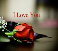 """Love Quotes About love messages Truth Is, Always I Love You Forever Positive Love quotes about life """" I Love You and for You Always. Cute Love Quotes, Inspirational Quotes About Love, I Love You Means, L Love You, My Love, Valentine's Messages For Her, I Love You Pictures, Image Hd, Good Morning Photos"""