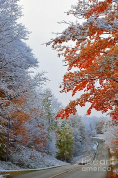 Snow flocks vivid maple trees in the autumn landscape scene. This image was captured in Cadillac, Michigan,