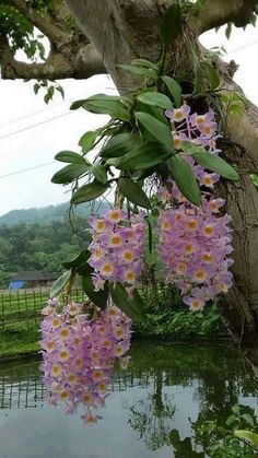 All type of orchids. flowers and plants, in gardens or wild. Unusual Flowers, Rare Flowers, Amazing Flowers, Beautiful Flowers, Orchids Garden, Orchid Plants, Exotic Plants, Orquideas Cymbidium, Dendrobium Orchids