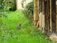 chat en campagne