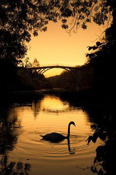 Sunrise Swan - Ironbridge, Shropshire  Ironbridge is an open air museum of the Industrial Revolution. Enchanting. I loved it.