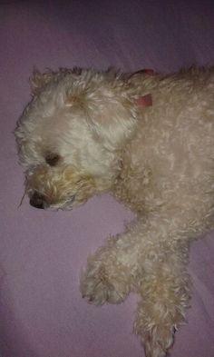 ... minha eterna cãopanheira, né branquinha??????.... beijinhos ♥