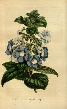 v.1 (1845) - Flore des serres et des jardins de l'Europe - Biodiversity…