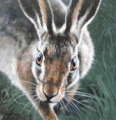 Hare, A Close Encounter, Shropshire by Gailroseartsandcraft, £4.99