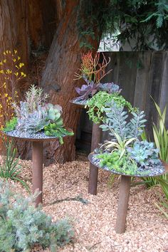 Succulent stands