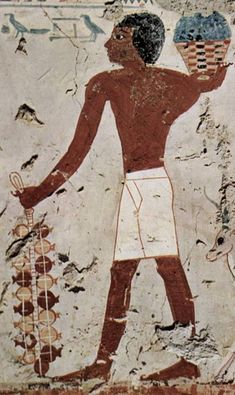 Pomegranates were grown in Egyptian gardens;these small trees are drought resistant,& yield delicious fruits that are antioxidant rich.Pomegranate fruits were included in later Egyptian burials to signify the hope of eternal life for the Soul.Depicted-Egyptian wall painting of pomegranates being gathered
