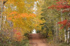 Appin Road - Prince Edward Island - driedchar Flickr