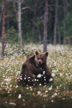 The Endless Forest Nature Animals, Animals And Pets, Baby Animals, Cute Animals, Wild Animals, Wildlife Photography, Animal Photography, Beautiful Creatures, Animals Beautiful
