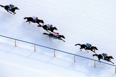 www.horsealot.com, the equestrian social network for riders & horse lovers | Horseracing at St. Moritz.