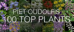 Piet Oudolf is a world-famous garden designer, nurseryman and writer. In 2013 he singled out the 100 plants he won't do without and we have them all listed for you here in Shoot.