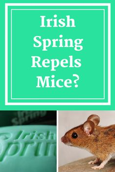 Does Irish Spring Soap Repel Mice Away? Find out if Irish Spring soap that is placed around the house and yard is an effective way to get rid of mice.