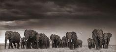 ElefantesGarzas by iccc.blog, via Flickr