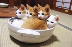 #Cats #Cat #Kittens #Kitten #Kitty #Pets #Pet #Meow #Moe #CuteCats #CuteCat #CuteKittens #CuteKitten #MeowMoe #CuteCats... https://www.meowmoe.com/31569/