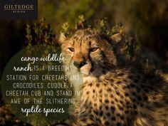 Garden Route | Cango Wildlife Ranch