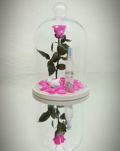 Lasts Forever . Forever Rose, Thessaloniki, Flower Show, Snow Globes, Greece, Roses, Flowers, Instagram, Home Decor