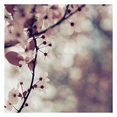 If I Were A Flower - Fine Art Photograph
