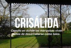Soñando hasta Saturno: Iniciativa Palabras Bonitas del Español