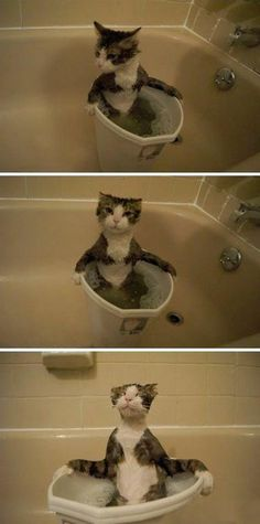 Hot tubbin kitty -  The cat's face is priceless!