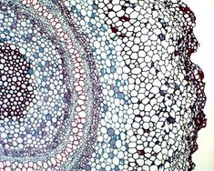 A microscopic picture of plant cells.