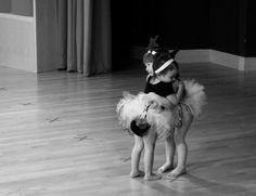 ballarinas. Soo cute. My Lulu will be a beautiful ballerina!