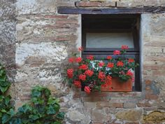 Flowers in a Window In a Tuscan Village, San Quirico d'Orcia, Italy  ~ by Dennis Flaherty