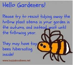 Bee Quotes And Proverbs. Stop being so 'tidy'! Create natural habitats not magazine cover, sterile aesthetics ...