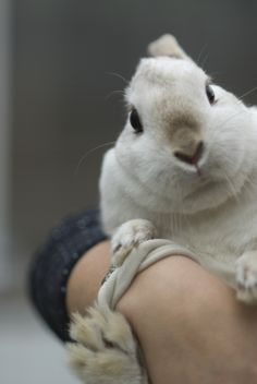 Bunny Leans into the Picture - February 7, 2011