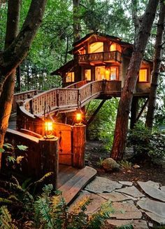 beautiful big tree house woods