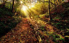 autumn, rays, fern, forest, sun, Path, Leaf