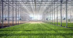 BrightFarms raises $30.1 million to set up futuristic greenhouses across the U.S.  |  TechCrunch