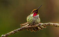 #animals #bird #hummingbird #branch #opreneie #photo #background #natural