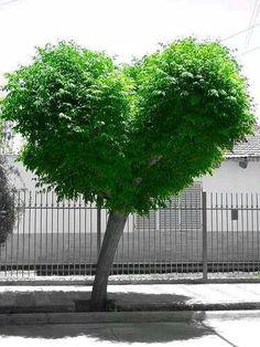 Love tree ~ nature love