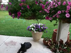 Hanging baskets and Priss