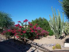 Courtyard off my room JW Marriott Camelback Inn Scottsdale Resort & Spa, Paradise Valley