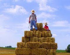 summers on the #farm