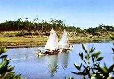 Retratos de Portugal: Aveiro - Barcos Moliceiros